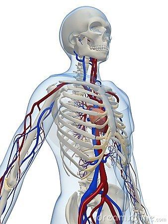 vasculair
